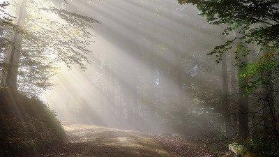 Nationalpark Schwarzwald - Nationalpark-Partner Initiative Erst-Check