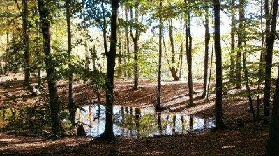 Biosphärenreservat Schorfheide-Chorin - Partner der Biosphärenreservats-Initiative Erst-Check