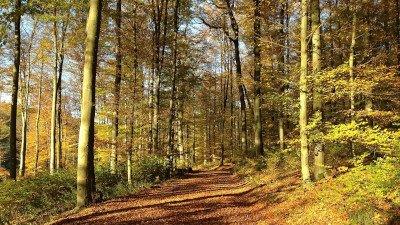 Begleitung touristische Profilierung Westerwald